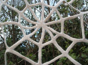 Detail of the centre of cobweb