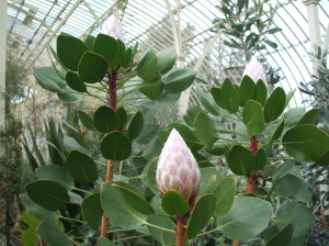 One of the beautiful Australian plants in the Curvilenear Range