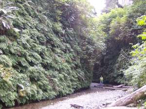 Stunning Fern Canyon